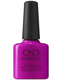 SHELLAC ROOFTOP HOP SUMMER CITY CHIC CND