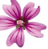 Flor Biocelular