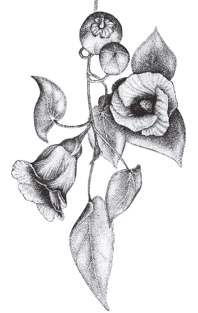 Flor ácido hialurónico